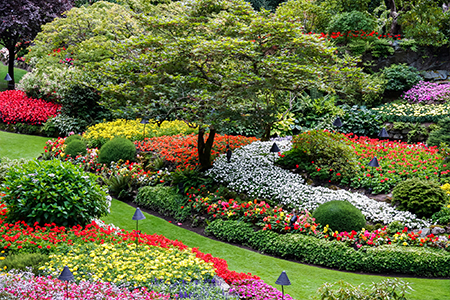 Bedding Plants Radebaugh Greenhouses, What Is An Annual Bedding Plant